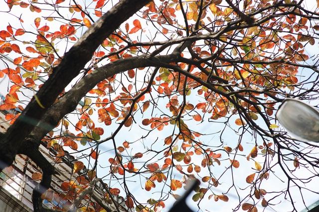 Mùa đông Hà Nội có hương vị gì khiến người ta phải lòng đến thế, năm nào cũng đến mà vẫn khắc khoải ngóng trông - Ảnh 15.