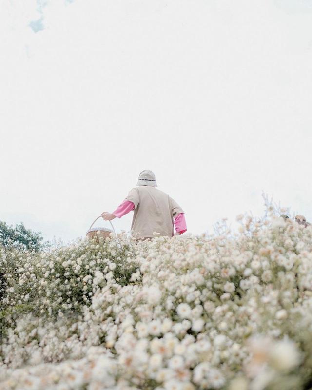 """Check in gấp ở 4 vườn hoa đẹp nhất Chiang Mai để biết vì sao nơi đây được mệnh danh là """"đóa hồng phương Bắc"""" của đất Thái - Ảnh 13."""