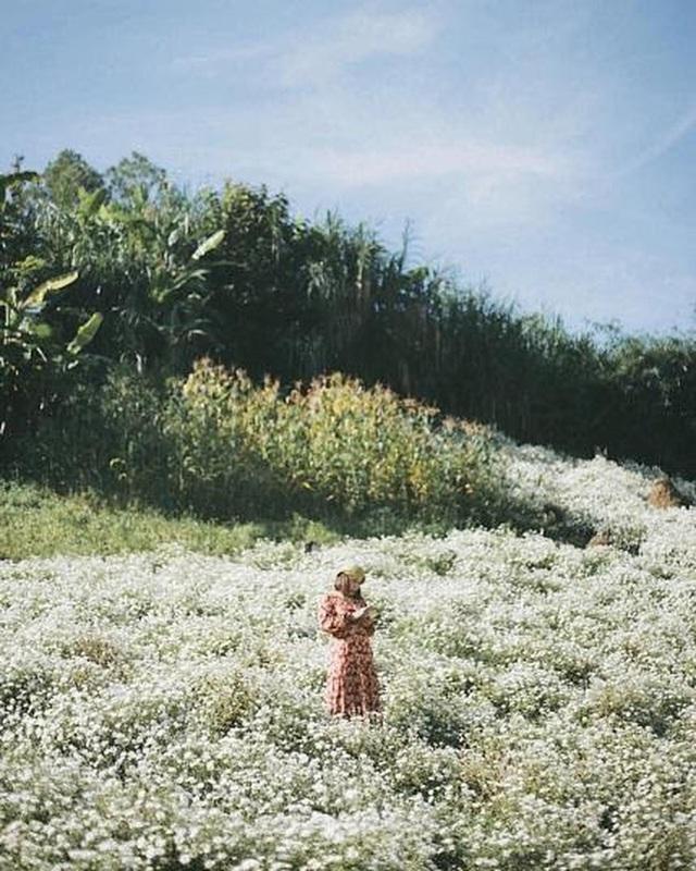"""Check in gấp ở 4 vườn hoa đẹp nhất Chiang Mai để biết vì sao nơi đây được mệnh danh là """"đóa hồng phương Bắc"""" của đất Thái - Ảnh 18."""