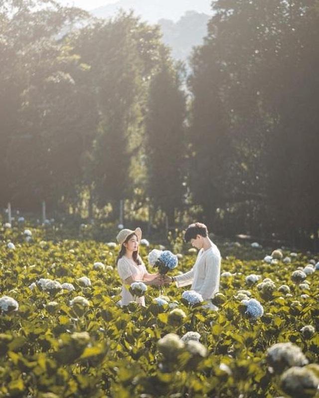 """Check in gấp ở 4 vườn hoa đẹp nhất Chiang Mai để biết vì sao nơi đây được mệnh danh là """"đóa hồng phương Bắc"""" của đất Thái - Ảnh 4."""