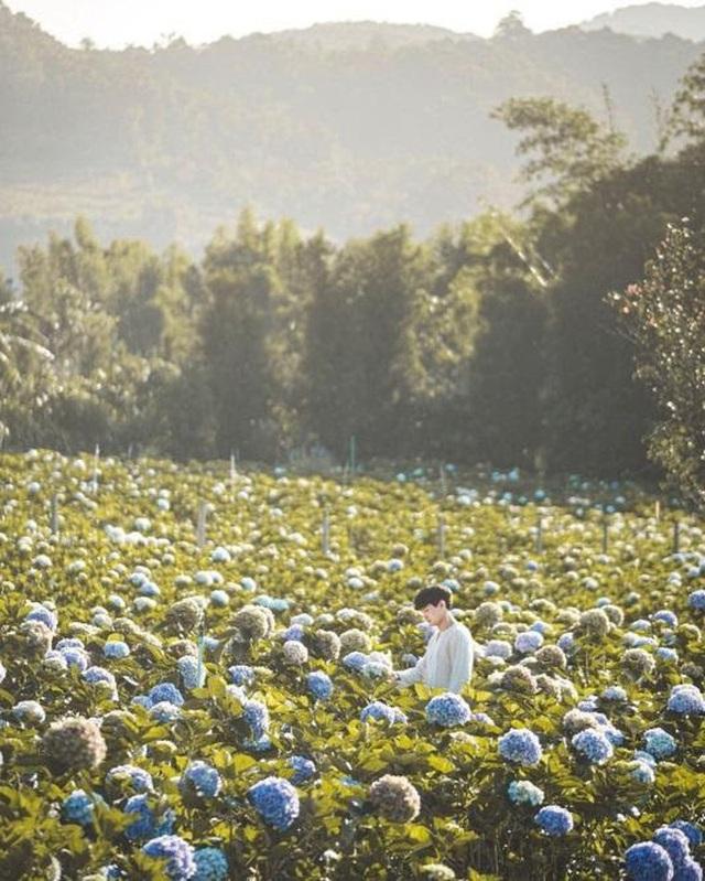 """Check in gấp ở 4 vườn hoa đẹp nhất Chiang Mai để biết vì sao nơi đây được mệnh danh là """"đóa hồng phương Bắc"""" của đất Thái - Ảnh 5."""