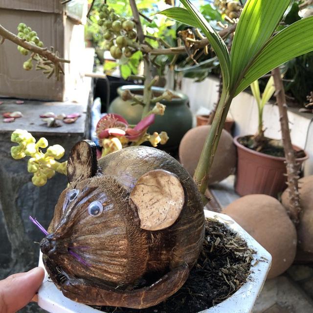 Biến quả dừa khô bỏ đi thành bonsai chuột tiền triệu, chàng thanh niên lãi đậm dịp Tết 2020 - Ảnh 6.