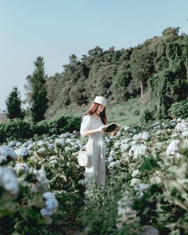 """Check in gấp ở 4 vườn hoa đẹp nhất Chiang Mai để biết vì sao nơi đây được mệnh danh là """"đóa hồng phương Bắc"""" của đất Thái - Ảnh 6."""