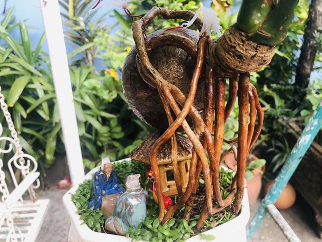 Biến quả dừa khô bỏ đi thành bonsai chuột tiền triệu, chàng thanh niên lãi đậm dịp Tết 2020 - Ảnh 10.