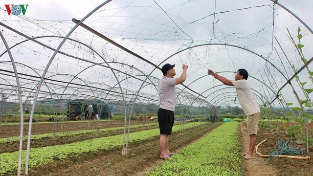 Giá rau tăng, làng rau La Hường mong một vụ Tết bội thu - Ảnh 2.