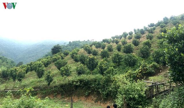 Nông dân Sơn La thu cả tỷ đồng/ha mỗi năm nhờ trồng Na Hoàng hậu - Ảnh 1.
