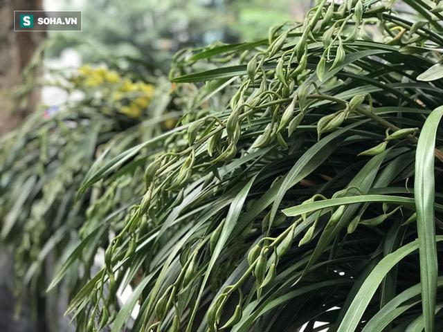 Hơn 300 triệu 1 chậu hoa lan Trần Mộng, đại gia có tiền cũng không mua được vì cháy hàng - Ảnh 2.