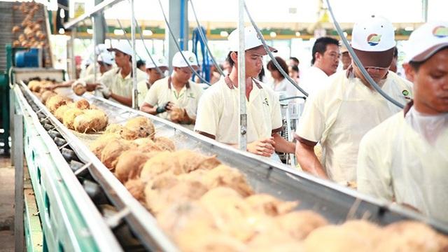 Bloomberg: Cơ hội cho ngành dừa Việt Nam từ nhu cầu ăn uống không sữa của người tiêu dùng phương Tây - Ảnh 1.