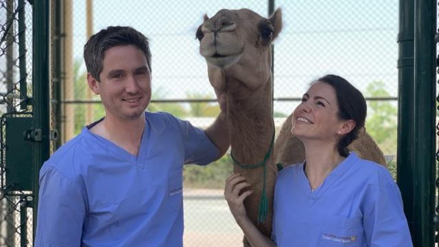 Khám phá bệnh viện 10 triệu USD cho lạc đà ở Dubai - Ảnh 2.