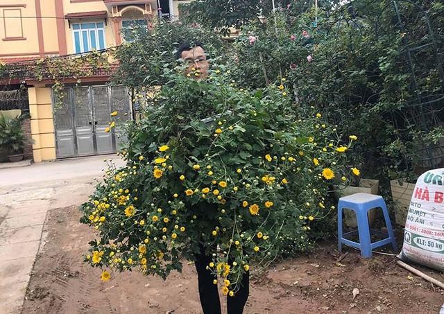 Hoa cúc dài 2 mét, hàng vạn bông rực vàng phủ kín 4 tầng nhà - Ảnh 3.