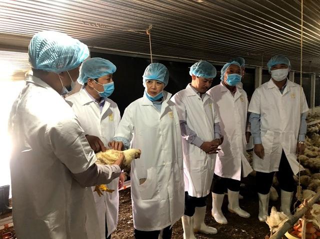 Thị trường thịt tết: Tăng gia cầm bù heo dịch - Ảnh 1.