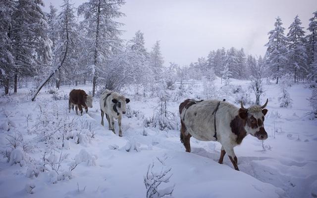 Ghé thăm ngôi làng lạnh nhất thế giới, nhiệt độ xuống tới -71,2 độ C hở cái gì ra là đóng băng cái ấy - Ảnh 15.