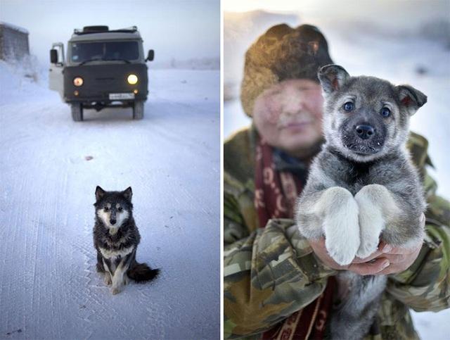 Ghé thăm ngôi làng lạnh nhất thế giới, nhiệt độ xuống tới -71,2 độ C hở cái gì ra là đóng băng cái ấy - Ảnh 20.