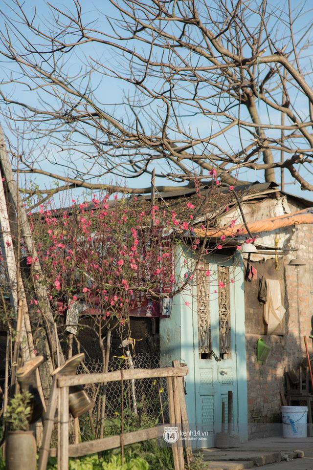 Chùm ảnh: Hà Nội 27 Tết đẹp dịu dàng, mộc mạc và ấp áp trong nắng Xuân sớm - Ảnh 8.