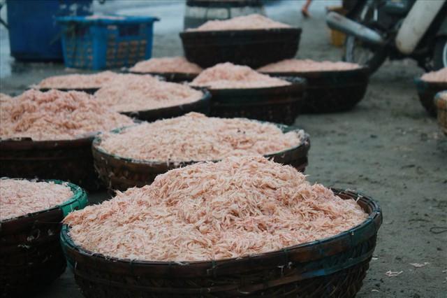 Ngư dân Đà Nẵng trúng mùa ruốc đầu năm, thu nhập bạc triệu mỗi ngày - Ảnh 2.