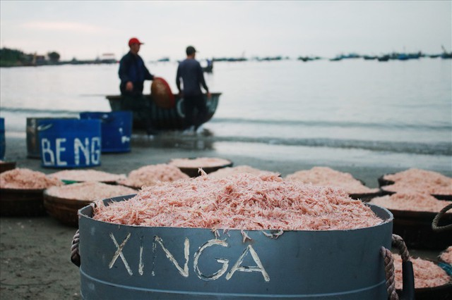 Ngư dân Đà Nẵng trúng mùa ruốc đầu năm, thu nhập bạc triệu mỗi ngày - Ảnh 7.