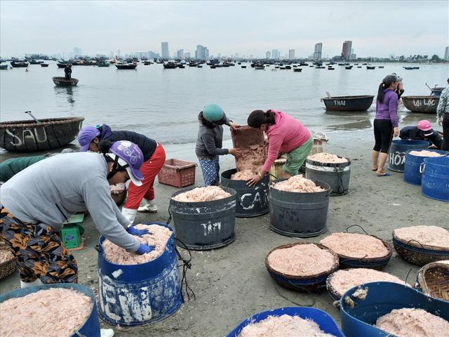 Ngư dân Đà Nẵng trúng mùa ruốc đầu năm, thu nhập bạc triệu mỗi ngày - Ảnh 8.