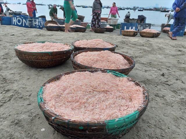 Ngư dân Đà Nẵng trúng mùa ruốc đầu năm, thu nhập bạc triệu mỗi ngày - Ảnh 9.