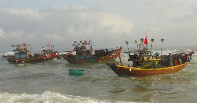 Ngư dân Quảng Bình cười tươi hơn tết nhờ trúng mùa, trúng giá cá trích - Ảnh 3.