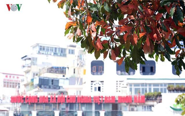 Ngỡ ngàng vẻ đẹp Hồ Gươm như mùa thu châu Âu - Ảnh 14.