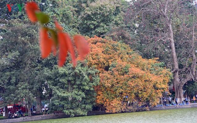 Ngỡ ngàng vẻ đẹp Hồ Gươm như mùa thu châu Âu - Ảnh 4.