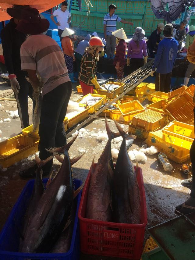 Tết trên biển và những mẻ cá trĩu nặng đầu năm - Ảnh 2.