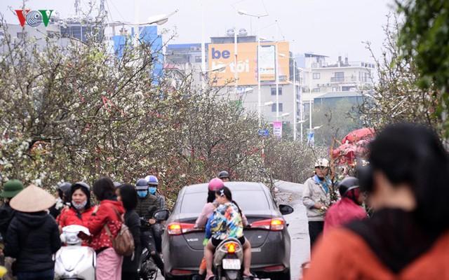 Ngỡ ngàng sắc hoa lê trắng tinh khôi trên đường phố Hà Nội - Ảnh 1.