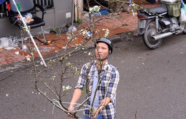 Ngỡ ngàng sắc hoa lê trắng tinh khôi trên đường phố Hà Nội - Ảnh 14.