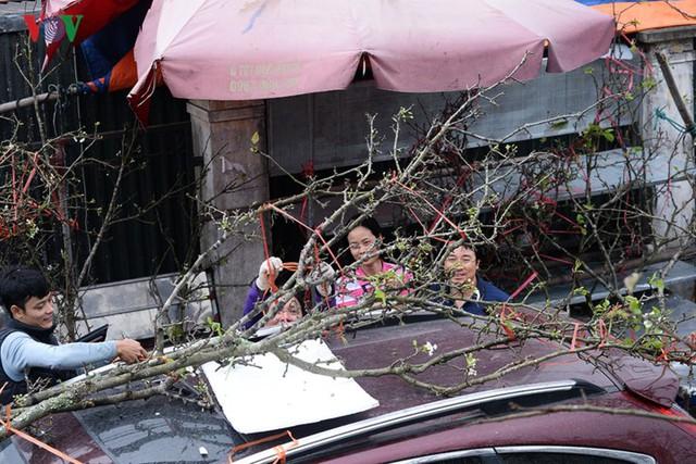 Ngỡ ngàng sắc hoa lê trắng tinh khôi trên đường phố Hà Nội - Ảnh 16.
