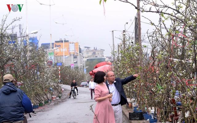 Ngỡ ngàng sắc hoa lê trắng tinh khôi trên đường phố Hà Nội - Ảnh 7.