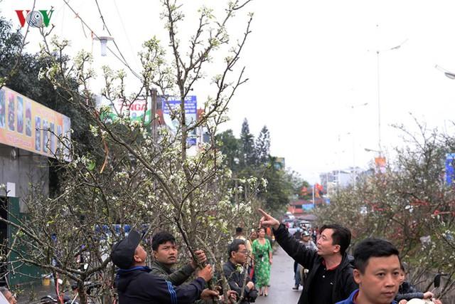 Ngỡ ngàng sắc hoa lê trắng tinh khôi trên đường phố Hà Nội - Ảnh 8.