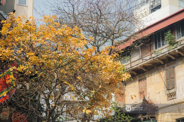 Hà Nội những ngày mùa xuân lá đỏ lá vàng: Đẹp mãi thế này thì khỏi cần đi Hàn hay Nhật luôn nhỉ? - Ảnh 14.
