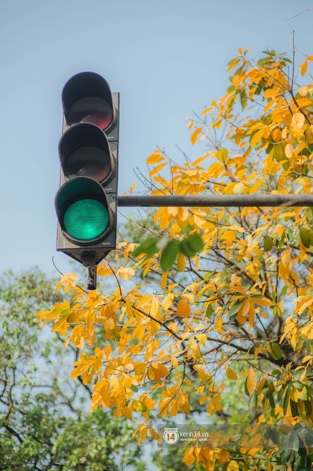 Hà Nội những ngày mùa xuân lá đỏ lá vàng: Đẹp mãi thế này thì khỏi cần đi Hàn hay Nhật luôn nhỉ? - Ảnh 9.