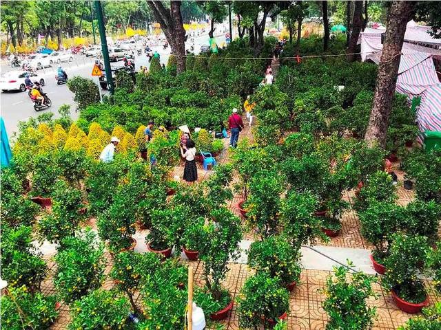 Chợ hoa Tết lớn nhất Sài Gòn nhộn nhịp ngày cuối năm - Ảnh 1.