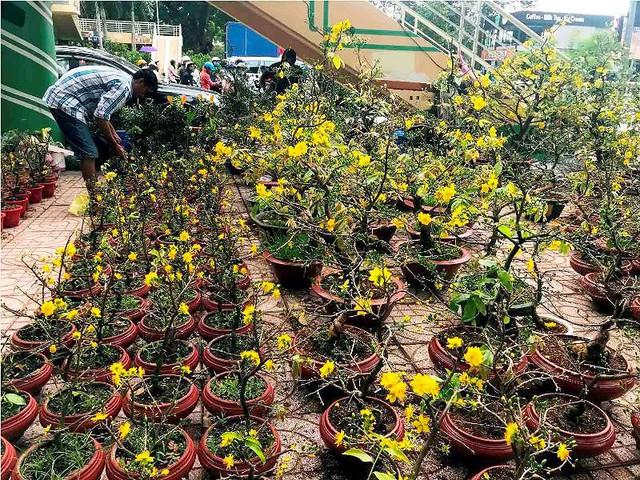 Chợ hoa Tết lớn nhất Sài Gòn nhộn nhịp ngày cuối năm - Ảnh 2.