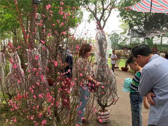 Chợ hoa Tết lớn nhất Sài Gòn nhộn nhịp ngày cuối năm - Ảnh 5.