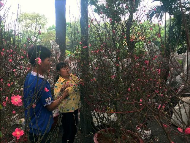 Chợ hoa Tết lớn nhất Sài Gòn nhộn nhịp ngày cuối năm - Ảnh 7.