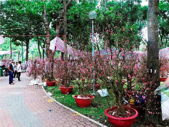 Chợ hoa Tết lớn nhất Sài Gòn nhộn nhịp ngày cuối năm - Ảnh 8.