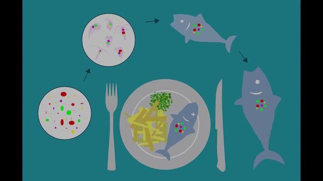 Những mảnh nhựa siêu nhỏ cũng ảnh hưởng tiêu cực đến sức khỏe của bạn như thế nào? - Ảnh 3.