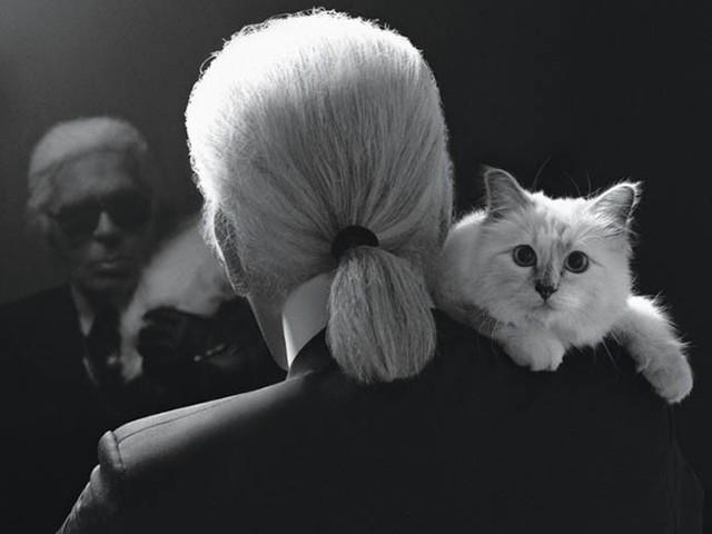 Khám phá thực đơn 5 sao của cô mèo Choupette giàu nhất thế giới, có món mà thường dân chúng ta có khi còn chưa ăn bao giờ - Ảnh 1.