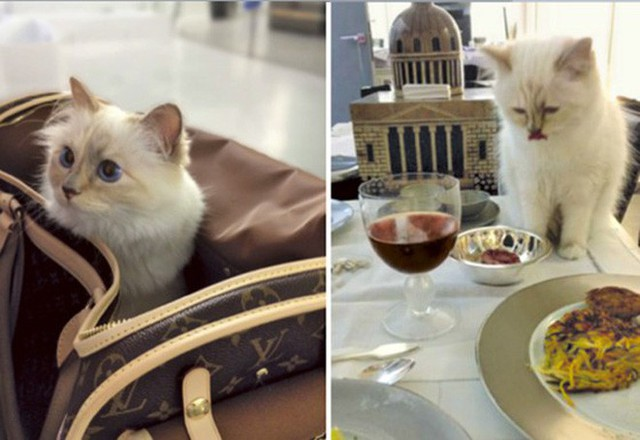 Khám phá thực đơn 5 sao của cô mèo Choupette giàu nhất thế giới, có món mà thường dân chúng ta có khi còn chưa ăn bao giờ - Ảnh 2.
