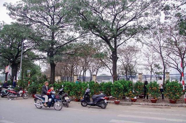 Quất, đào đại hạ giá tràn ngập phố Hà Nội ngày 30 Tết - Ảnh 3.