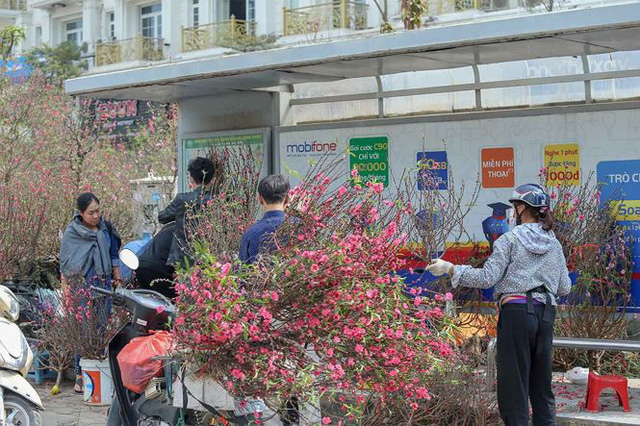 Quất, đào đại hạ giá tràn ngập phố Hà Nội ngày 30 Tết - Ảnh 10.
