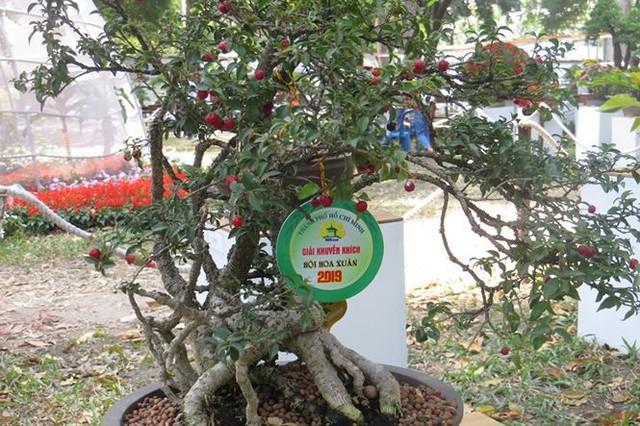 Đi chơi tết, dân Sài Gòn thích thú ngắm kỳ hoa dị thảo - Ảnh 11.