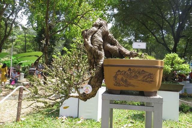 Đi chơi tết, dân Sài Gòn thích thú ngắm kỳ hoa dị thảo - Ảnh 13.