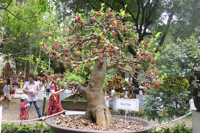Đi chơi tết, dân Sài Gòn thích thú ngắm kỳ hoa dị thảo - Ảnh 17.