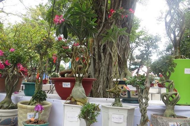 Đi chơi tết, dân Sài Gòn thích thú ngắm kỳ hoa dị thảo - Ảnh 5.