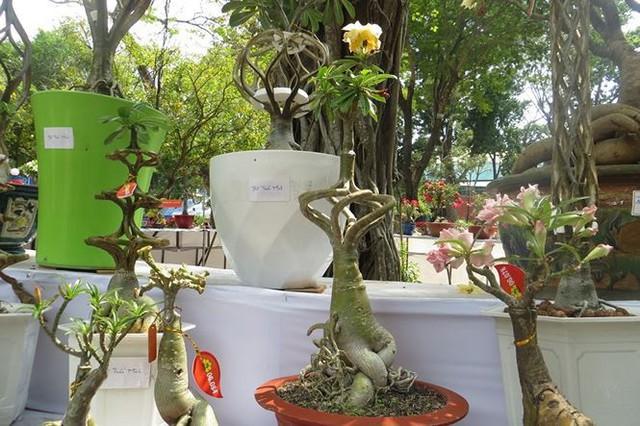 Đi chơi tết, dân Sài Gòn thích thú ngắm kỳ hoa dị thảo - Ảnh 6.