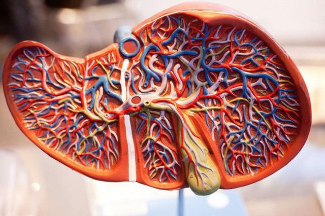 Dấu hiệu thay đổi trên da cho thấy bạn đã bị bệnh gan: Nếu trùng khớp thì nên đi khám ngay - Ảnh 5.