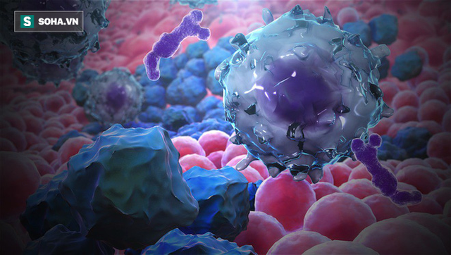 Những người không dễ bị ung thư đều có 4 điểm chung: Hãy xem bạn có thuộc nhóm này không? - Ảnh 1.